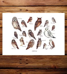 Owls Field Guide Art Print by Kate Dolamore Art on Scoutmob Shoppe