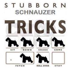 Ha ha ...Stubborn Schnauzer Tricks ;) Sooooo true!