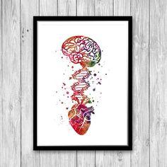 Medical Art Brain Heart DNA Watercolor Print Anatomy Art, Abstract Wall Art, Nurse Doctor Graduation Gift - Art Ed - Medical Drawings, Medical Art, Medical Doctor, Medical Humor, Medical School, Best Gifts For Doctors, Doctors Office Decor, Doctor Office, Biology Art