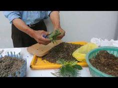 Influye la luna en la siembra de semillas   Plantas