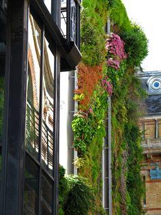 Rue d'Alsace   Mur Vegetal Patrick Blanc