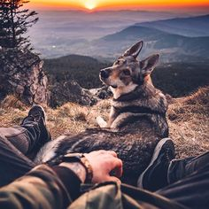 Happy and lazy Sunday, guys! We have the last 50 pieces of our Lightroom Presetspack 2018 for you! They will not resell again. Animals Of The World, Animals And Pets, Cute Animals, Wolf Husky, Cute Animal Memes, Hiking Dogs, Wolf Pictures, Dog Travel, Cute Dogs And Puppies