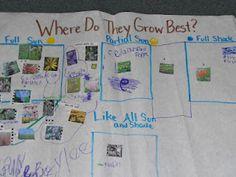 Planning for a school garden