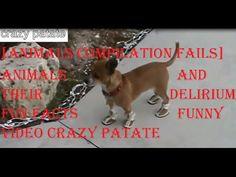 [COMPILATION ANIMALS FAILS] les animaux et leur délire fails amusant fun...