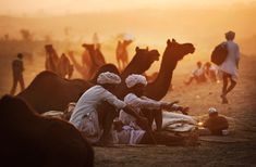 Pushkar Camel Fair, Rajastan, India