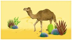 Walk Like a Camel- How do you have big fun in the hot desert sun? It's easy, just walk like a camel!