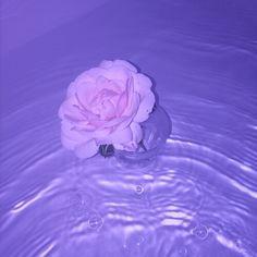 "xsadcorelolita: "" watch my life unfold all around me like a beautiful garden… """