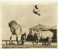Belmonte Cristiani performing a back somersault from front horse to back. Cole Brothers Circus 1940s.