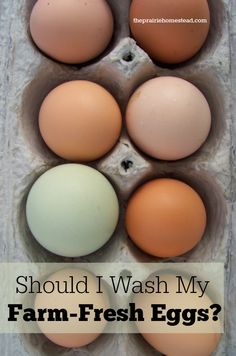 "Egg shells are porous, with a micro membrane coating on them called ""bloom"" to keep potential baby chicks and their environment safe and clean.  Bacteria has a hard time getting inside a dry egg. Washing dirty eggs removes the bloom and invites bacteria to be drawn inside the egg. And washing eggs in cool water actually creates a vacuum, pulling unwanted bacteria inside even faster."
