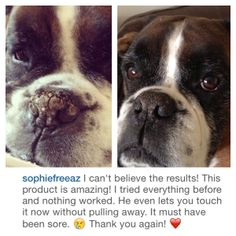 Take a look at Harry's nose after only 4 days of using #SnoutSoother⬅️ Know a doggie that could use some TLC? Please let us know! Join our mission, saving the world... one snout at a time!✨Thanks for sharing Sophie Freeaz.