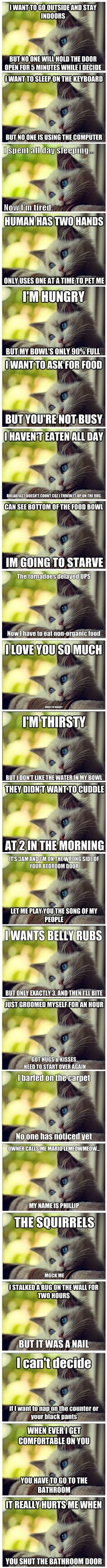 LOL! Cat problems...