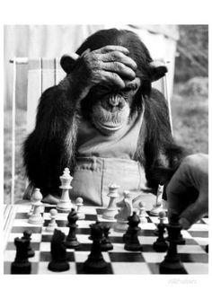 Schachpartner Kunstdruck - AllPosters.at