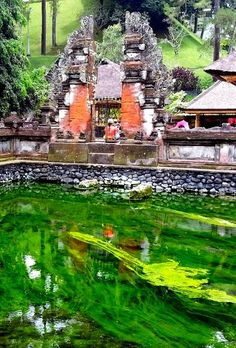 Vibrant green algae seen outside the Holy Water Temple in Bali, Indonesia