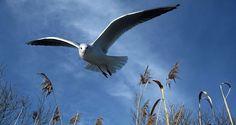 Mut verleiht Flügel