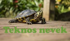 Easy pets for kids Animals For Kids, Animals And Pets, Funny Animals, Reptiles, Best Loans, Easy Pets, Pet Turtle, Animal Species, Central Coast