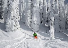 TERRAIN & LIFT WEBSITE: All of the upper mountain terrain is lightly covered in gorgeous, classical 'snow ghosts', but with them comes a warning to all who venture off piste – beware of the tree wells. Don't ski alone as the tree wells are deep and wide in some parts – particularly in Hellroaring Basin. Adds a bit of fun to the skiing mix!!