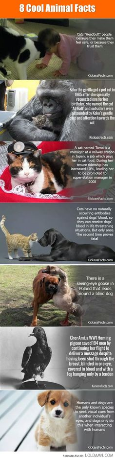 Cool Animal Facts. But I wonder about the last one-don't cats also do that?