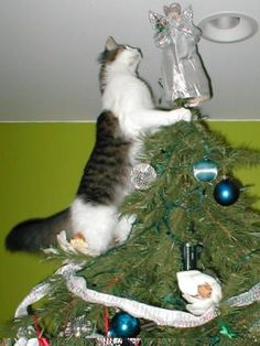 crazy xmas tree cats