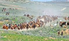 Image from the Great American Horse Drive, Sombero Ranch, Craig, Colorado USA. Colorado Usa, Craig Colorado, The Ranch, Country Life, Rodeo, Farm Animals, Cowboys, Dolores Park, Scenery