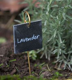 Hanging Slate Label On A Brass Rod. Cute Way Of Labeling For Almost  Anything! Garden Labels, Plant ...