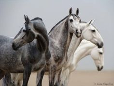 brigget eberl | The horses are Brigitte Eberl's Cobra mare resins. They were brought ...