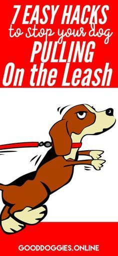 Dog leash pulling can be frustrating and dangerous. Stop letting your dog pull you with these 7 easy training tips for any dog or puppy. #leash #dogstuff