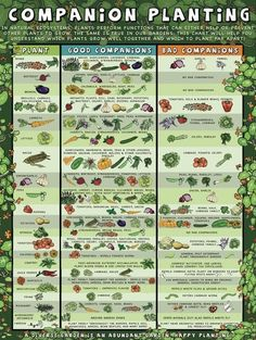 Know what to plant with your favorite veggies and foods, so that they thrive!