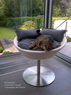 Rondo modern furniture for cats, a cat scratch post and cat condo.