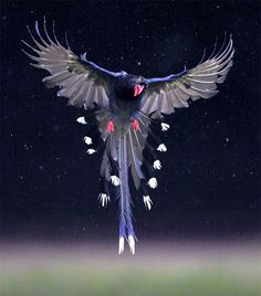 Taiwan Blue Magpie, taken at Xingyi Park, Taipei City, TAIWAN