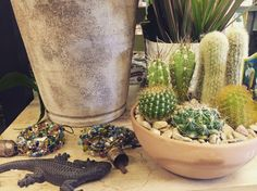 Rustic appeal with a little bit of cacti decor from our Garden Dept.
