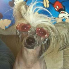 Sporting the shades...Crested Love