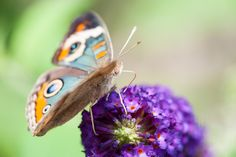Love the colors of this butterfly and flower.