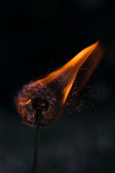 fire flame light dark night