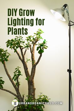 For seriousindoor gardeners, growingplants indoors day in and day out without relying on sunlight. You can make your DIY grow light at home. LED lights serve as a great alternative light source for your plants. In this article, we've compiled and reviewed some of the best LED grow lights for indoor plantsto helpyou become an expert indoor gardener. #GrowLights #Plants #IndoorGarden #Gardening #UrbanOrganicYield Gardening For Beginners, Gardening Tips, Indoor Garden, Indoor Plants, Best Led Grow Lights, Growing Plants Indoors, House Plant Care, Led Diy, Hacks Diy