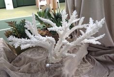 Stag horn coral on lucite base, 175.00