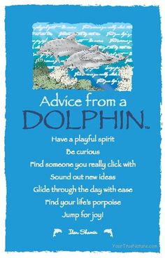 Advice from a dolphin