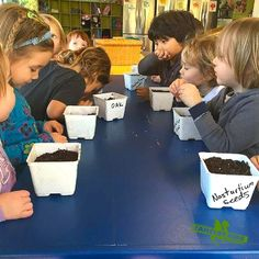 Get ready to plant and seed your way into oblivion with this unique and hands on approach to gardening. The children explore lady bugs and garden friendly insects while taking pride in observing plants grow in an organic garden that they will help grow & tend to at Camelot. Eventually the kids get to eat what they have grown for snack and share it with their friends. http://www.camelotkids.org/#!enrichment-classes/u8cco