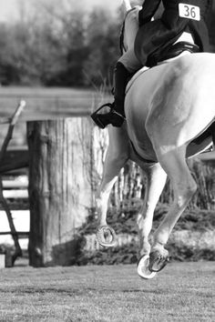 mid-air | BW grey english feet cantering