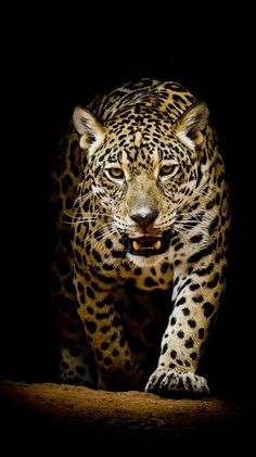 155 Really Beautiful Backgrounds For Your iPhone Jaguar Wallpaper, Tier Wallpaper, Live Wallpaper Iphone, Best Iphone Wallpapers, Cat Wallpaper, Animal Wallpaper, Live Wallpapers, Hd Desktop, Animal Jaguar
