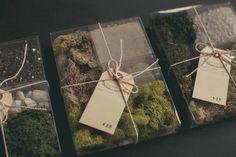 DIY terrarium kits c/o Sweet Woodruff