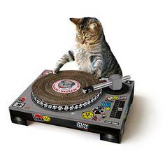 Cat DJ Scratching Disc