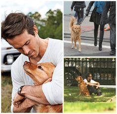 Celebs and their Pets ... Ryan Reynolds