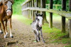Cutest foal in the world  | 10 Cutest Foals Ever