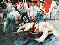 The Cruelty of Horse-Drawn Carriages | Animals Used for Entertainment | The Issues | PETA   ------    **** [DenisCoderre: Non aux calèches / No horse-drawn carriages in #montreal. - Sign the Petition! https://www.change.org/p/deniscoderre-non-aux-cal%C3%A8ches-no-horse-drawn-carriages-in-montreal?recruiter=174519984&utm_source=share_petition&utm_medium=twitter&utm_campaign=share_twitter_responsive via @CdnChange] ****