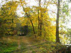 La Garonne #Toulouse balade forestière