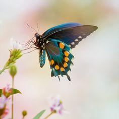 butterfly HD - Buscar con Google
