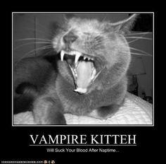 Sandler Bing as an LOL Cat