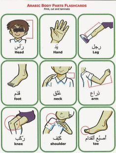 Learn real Arabic: body parts in Arabic (MSA)