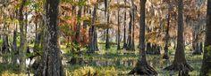 Savannah National Wildlife Refuge | Georgia and South Carolina