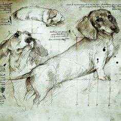 The best way to learn something is to study the masters. Leonard da vinci studied nature like a scientist. He made drawings of cats, dogs and horses.